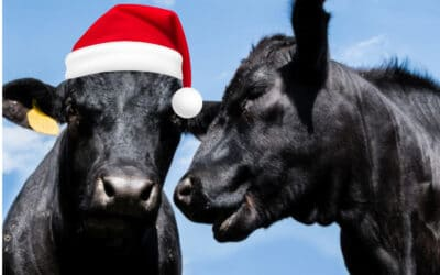 Merry Christmas from the team at Anexa Vets