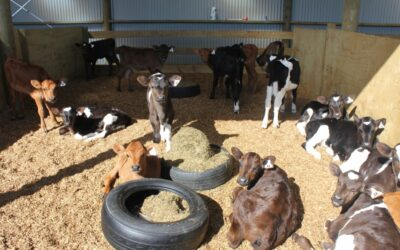 Keep calves cosy for the best start