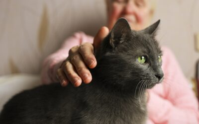 4 questions to ask yourself about your older pet