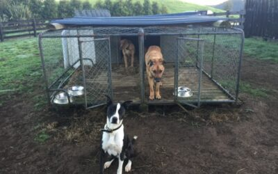 How to improve your working dog kennels!