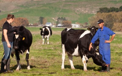 What feed situation are you in this summer and what are the consequences of that for cow condition?