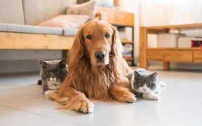 Have you considered pet insurance?