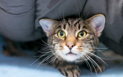 Is your cat anxious?