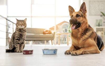 Do you love your dog or cat too much?
