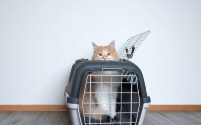 Cat carriers – reducing the stress