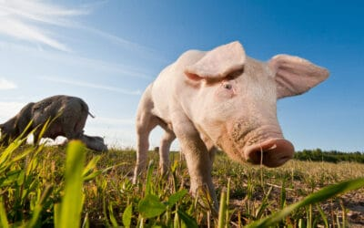 Animal Welfare – how will the changes affect you?