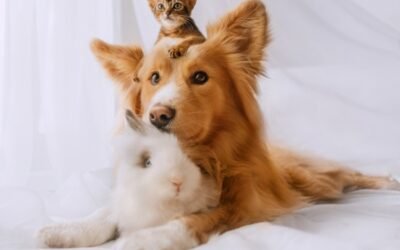 De-sexing, neutering, spaying, castrating – is it time to 'fix' your pet?
