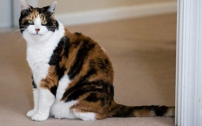 Is your cat toileting indoors?