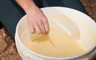 Timing of colostrum is vital
