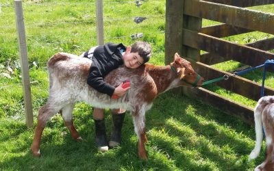 Caring for your Ag Day Calf