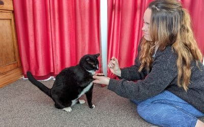 Teaching your cat to shake hands in 5 easy steps!