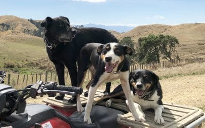 What do we vaccinate our working dogs for?