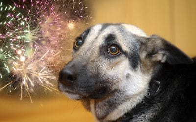 10 tips to keep your pets happy during fireworks